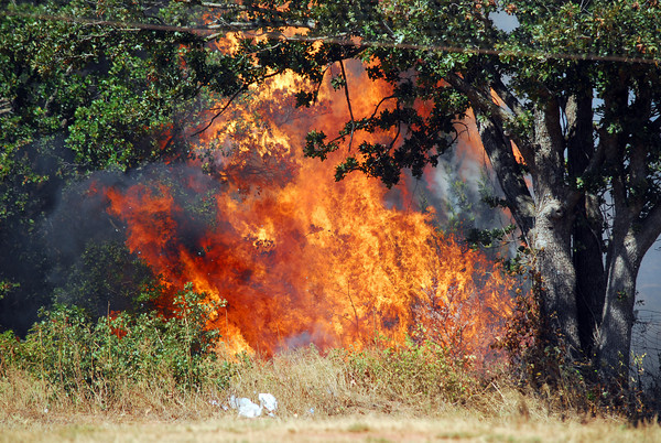 Flames ingnite in a brush of trees and approaches Praire Creek Moble Home Park Saturday afternoon.<br /> Kyle Phillips/The Transcript