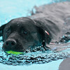Pooch Pool Party
