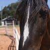 horses 11