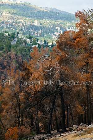 201407195536JerusalemForestFire