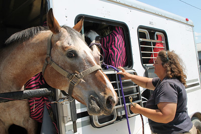 LAWRENCE PANTAGES / GAZETTE Brenda Shipley of Winning Way Stables in Montville Township, gets ready to move Bandit, left, and Boo Berry Bay from a van to a barn Sunday in preparation for today's start of the 2017 Medina County Fair.