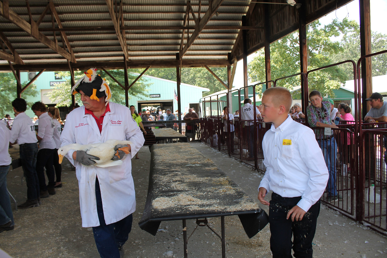 LAWRENCE PANTAGES / GAZETTE Medina County Fair judge Larry Lokai of Columbus takes a Peking duck from Scott Hitchcock II of Lafayette Township to a table where it ranked sixth this week in the poultry competition category. Lokai has come from the state capital to judge the poultry events at the Medina County Fair for 29 years.