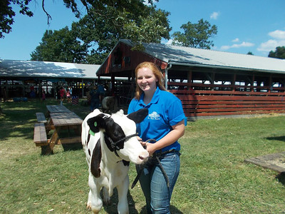 PHOTO PROVIDED Culley Emerson, a junior at Buckeye High School, is shown at the Medina County Fair with her Starter Calf, Stanley.