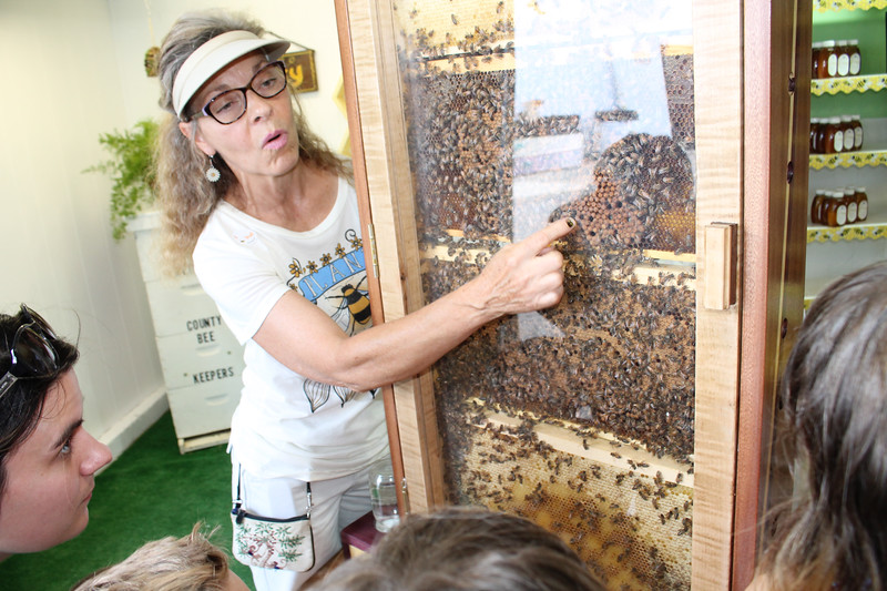 LAWRENCE PANTAGES / GAZETTE Lynnette Horne of Granger Township works this week for the Medina Beekeepers Association's booth at the Medina County Fair. She is explaining the role of the different bees in a hive.