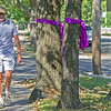 Brad Belk walks past ribbons for Domestic Violence Awareness Month and Breast Cancer Awareness Month near Fourth and Sergeant streets on Friday.  The ribbons were placed throughout the Murphysburg district by the Historic Murphysburg Preservation Inc. nonprofit group.<br /> Globe | Laurie Sisk