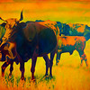 "Bold, flourescent colors light up the canvas in artist Michael Gory's acrylic piece ""Corriente Sol"" on display at the Urban Art Gallery. Gory's work reflects his admiration of large animals.<br /> Globe 