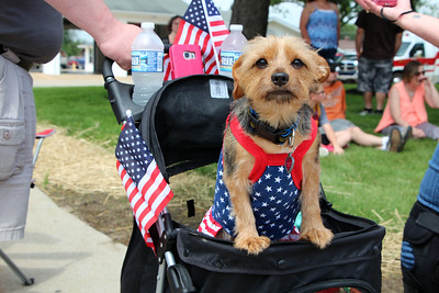 HALEE HEIRONIMUS / GAZETTE Nala, an 18-month-old Yorkie/Chihuahua mix, dressed in patriotic attire for the York Township Memorial Day parade Sunday afternoon. Nala's owners are Todd and Monica Ziega of York Township. Monica Ziega is a firefighter for the York/Erhart Fire Department.