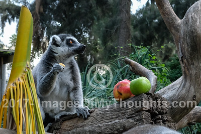 Safari Animals Prepare for Rosh Hashanah in Ramat Gan, Israel