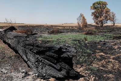 Arson Terrorism on the Gaza Border