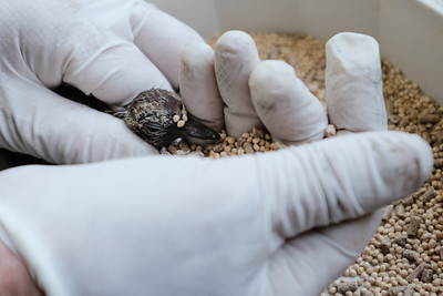 Medical Treatment for Wildlife in Israel