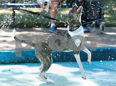 Tyler resident Nicole Helmuth's dog Rosie plays in the water area at Petapalooza Saturday Sept. 12, 2015 held at Bergfeld Park in Tyler, Texas. Petapalooza is an annual animal adoption and education event.   (Sarah A. Miller/Tyler Morning Telegraph)