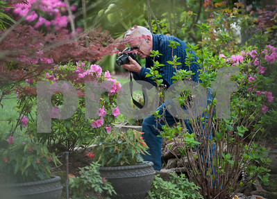 Kyle Kidney of of Pardeeville, Wisconsin photographs  azaleas in Guy and Joan Pyron's yard on Dobbs Street. The Pyrons will host the opening ceremony of the Azalea & Spring Flower Trail Friday at 10 a.m.  (Sarah A. Miller/Tyler Morning Telegraph)
