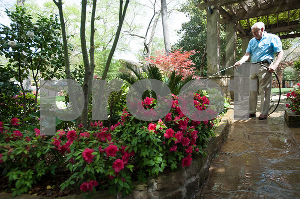 Guy Pyron waters the azaleas and other flowers in his yard on Dobbs Street. The Pyrons will host the opening ceremony of the Azalea & Spring Flower Trail Friday at 10 a.m.  (Sarah A. Miller/Tyler Morning Telegraph)