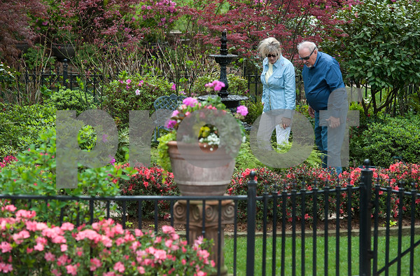 Holli Durrett of Jacksonville and Tom Buchanan of Tyler look at azaleas in Guy and Joan Pyron's yard on Dobbs Street. The Pyrons will host the opening ceremony of the Azalea & Spring Flower Trail Friday at 10 a.m.  (Sarah A. Miller/Tyler Morning Telegraph)