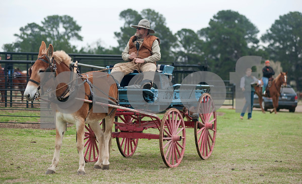 photo by Sarah A. Miller/Tyler Morning Telegraph  Billy Wilson of Jacksonville, Texas rides in an antique spring wagon pulled by a mule at the 1836 Chuckwagon Race Festival held at Diamond B Ranch in Neches, Texas Wednesday. The event celebrates Texas Independence Day Weekend sanctioned chuckwagon races March 7-9 and camping and other events throughout the week such as concerts, trail rides, a mounted shooting clinic and a dutch oven cooking class.