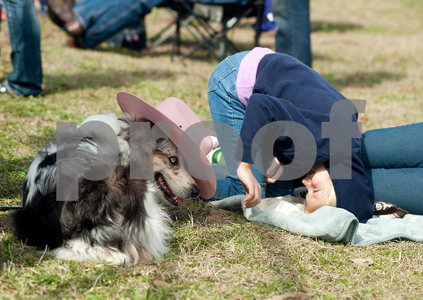 photo by Sarah A. Miller/Tyler Morning Telegraph  Laney Taylor, 7, of Slocum, Texas takes an upside down look at her dog Blue after she set a pink cowboy hat on its head in between races at the 1836 Chuckwagon Race in Neches, Texas Friday March 7, 2014. The 1836 Chuckwagon Race at Diamond B Ranch is a week long celebration of western culture centering around Texas Independence Day weekend.
