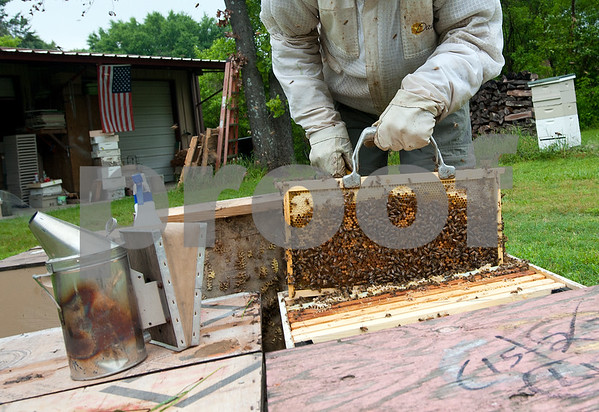 photo by Sarah A. Miller/Tyler Morning Telegraph  Beekeeper Dick Counts pulls out a frame from a beehive in his yard Thursday April 23, 2015 in Chapel Hill. Counts, who is president of the East Texas Beekeepers Association, was preparing thousands of bees to be ready for delivery to new homes.