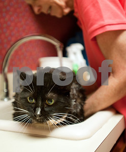 photo by Sarah A. Miller/Tyler Morning Telegraph  Tyler resident Mary Ann Clifford gives Daisy Mae a bath at her home Monday. Clifford is the author of new book Reflections of a Cat Whisperer. The autobiography provides information on the many facets of felines, inspirational and humorous stories about Clifford's cat encounters, as well as advice on how she handled cats with physical and emotional disabilities.