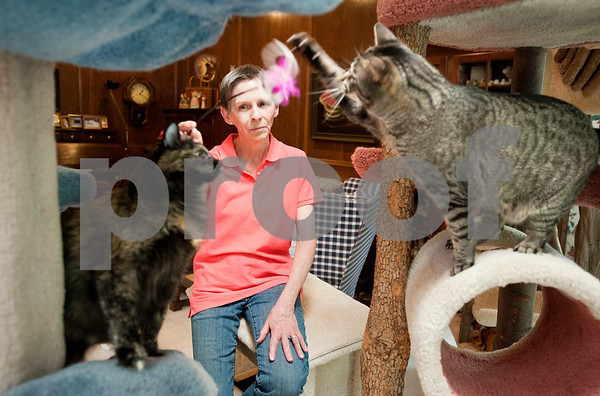 photo by Sarah A. Miller/Tyler Morning Telegraph  Tyler resident Mary Ann Clifford plays with two of her cats, Foxy, left, and William, right, at her home Monday. Clifford is the author of new book Reflections of a Cat Whisperer. The autobiography provides information on the many facets of felines, inspirational and humorous stories about Clifford's cat encounters, as well as advice on how she handled cats with physical and emotional disabilities.