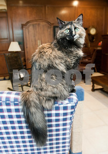 photo by Sarah A. Miller/Tyler Morning Telegraph  Foxy is one of Tyler resident Mary Ann Clifford's cats.  Clifford is the author of new book Reflections of a Cat Whisperer. The autobiography provides information on the many facets of felines, inspirational and humorous stories about Clifford's cat encounters, as well as advice on how she handled cats with physical and emotional disabilities.