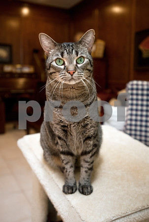 photo by Sarah A. Miller/Tyler Morning Telegraph  William is one of Tyler resident Mary Ann Clifford's cats.  Clifford is the author of new book Reflections of a Cat Whisperer. The autobiography provides information on the many facets of felines, inspirational and humorous stories about Clifford's cat encounters, as well as advice on how she handled cats with physical and emotional disabilities.
