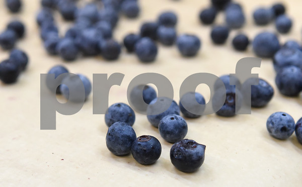 Blueberries ride on a conveyor belt as they are sorted for packaging at Echo Springs Blueberry Farm in Brownsboro Friday June 24, 2016.   (Sarah A. Miller/Tyler Morning Telegraph)