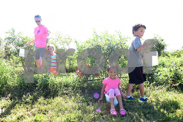 Joanna Jordan of Flint, Olivia Jordan, 3, Annabeth Jones, 3, and DJ Jones, 6, pick blueberries at Echo Springs Blueberry Farm in Brownsboro Friday June 24, 2016.   (Sarah A. Miller/Tyler Morning Telegraph)