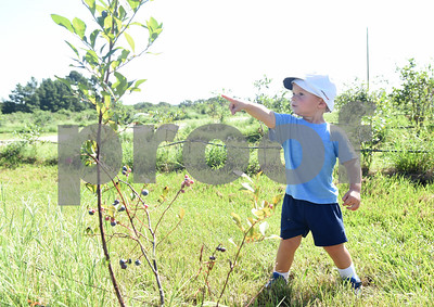 Aiden Stoeckle of Garland points to blueberries at Echo Springs Blueberry Farm in Brownsboro Friday June 24, 2016.   (Sarah A. Miller/Tyler Morning Telegraph)
