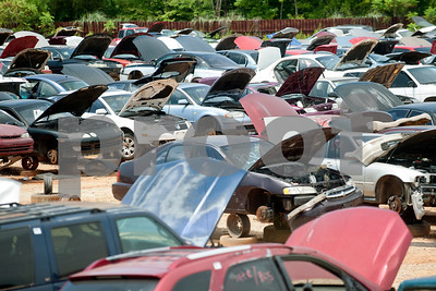 Vehicles with their hoods raised are lined up waiting for customers Tuesday July 21, 2015 at Locos Gringos Pick-n-Pull, 10310 County Road 383 in Tyler. Locos Gringos is an auto recycler that buys vehicles and sells them for parts in their self-service lot. They have about 900 automobiles on their 14 acre property.  (photo by Sarah A. Miller/Tyler Morning Telegraph)