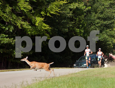 photo by Sarah A. Miller/Tyler Morning Telegraph  Cori and Ryan Moore of Flint, Texas run down McElroy Road in Whitehouse as part of their Ironman training Wednesday Aug. 20, 2014. The couple are competing in Ironman Louisville in Louisville, Kentucky Sunday. An ironman triathlon race includes long-distance swimming, bicycling and running races.