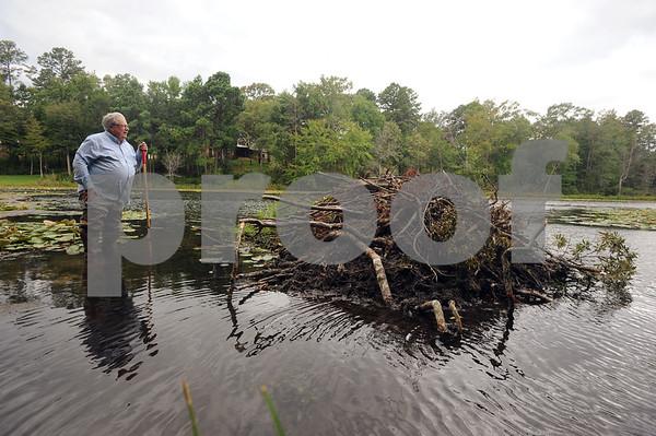 copyright 2012 Sarah A. Miller/Tyler Morning Telegraph  Paul Jones keeps watch over a beaver dam on private property in south Tyler Thursday.