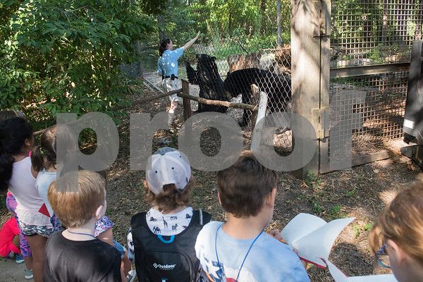 Caldwell Zoo zoo keeper Amanda Massau shows how the American black bears are trained to do things like stand up, sit down, put their paws on the fence and open their mouths, movements which is helpful for dental or medical work on the animals. Children learned about the bears during a summer camp at zoo on Friday Aug. 3, 2018.  (Sarah A. Miller/Tyler Morning Telegraph)
