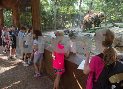 Children enrolled in the zoo's summer camp learn about American black bears at the Caldwell Zoo on Friday Aug. 3, 2018.  (Sarah A. Miller/Tyler Morning Telegraph)
