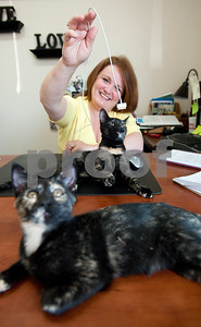 photo by Sarah A. Miller/Tyler Morning Telegraph  Franice Hodges of Tyler plays with a cat she rescued and keeps  at her office, pictured here, at Batten's Photogem.