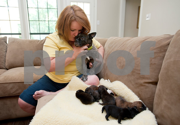 photo by Sarah A. Miller/Tyler Morning Telegraph  Francie Hodges of Tyler holds Mary, a Boston terrier who was found pregnant and saved by a dog rescue group in Houston. Hodges is taking care of Mary and her litter of puppies at her home.