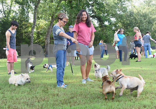 A group of small dogs run around Nelly Guerra and Aaliyah Melahn, 16, at Sunrise Paw Park, 114515 County Road 166, Baggett Road in Tyler. The new dog park has separate areas for large dogs and small dogs as well as drinking fountains and a dog wash station. The Tyler Sunrise Rotary Club and the Anderson-Vukelja Foundation collaborated on the project which was privately funded.   (Sarah A. Miller/Tyler Morning Telegraph)