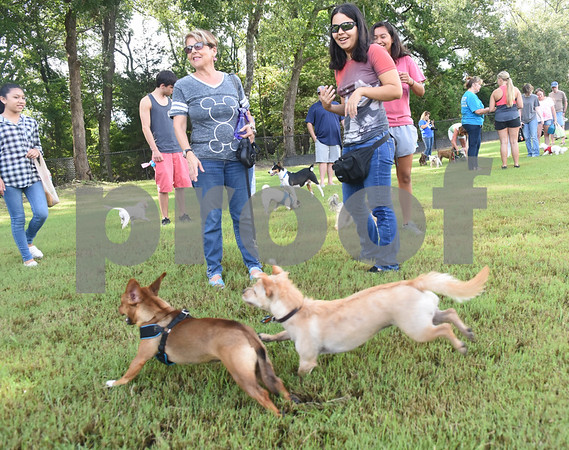 A group of small dogs run around people at Sunrise Paw Park, 114515 County Road 166, Baggett Road in Tyler. The new dog park has separate areas for large dogs and small dogs as well as drinking fountains and a dog wash station. The Tyler Sunrise Rotary Club and the Anderson-Vukelja Foundation collaborated on the project which was privately funded.   (Sarah A. Miller/Tyler Morning Telegraph)