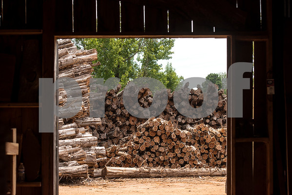 Timber at Wilcox Timber & Lumber in Rusk, Texas, on Tuesday, Sept. 12, 2017. Wilcox Timber & Lumber is a family-owned specialty sawmill offering quality woods like cedar, mesquite and cypress. They began their logging operation in 1980 and sawmill operation in 1997. (Chelsea Purgahn/Tyler Morning Telegraph)