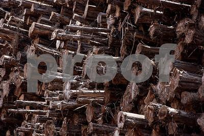Lumber and Timber