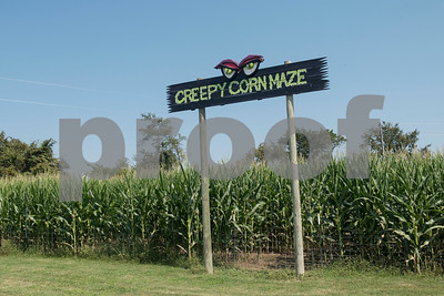 A corn maze is pictured at Yesterland Farm in Canton  Sept. 14, 2017. The farm is hosting their Grand Re-Opening weekend Sept. 23 and 24. The facility has been updated throughout the summer after a tornado hit the property on Interstate 20 in April 2017.  (Sarah A. Miller/Tyler Morning Telegraph)
