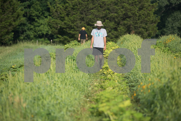 Caleb Groth and Christopher Umierski harvest vegetables at Red Moon Farm in Van June 21, 2017. Red Moon Farm is an organic farm and CSA (community-supported agriculture). In the CSA system customers become members who buy a share of the harvest from the farm and the farm commits to growing the produce for each member.   (Sarah A. Miller/Tyler Morning Telegraph)