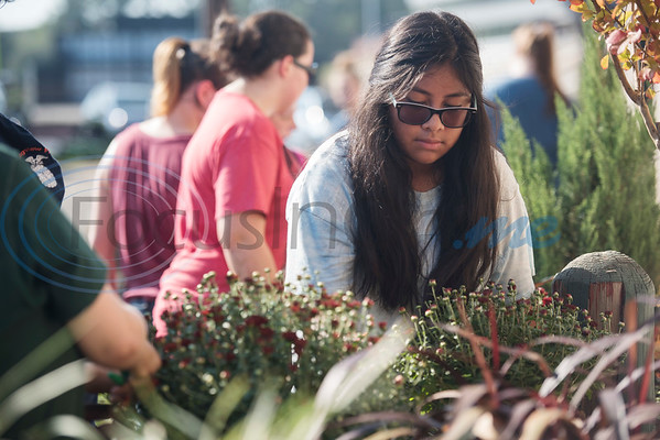 Longview High School's sophomore Michele Loza, 15, plants flowers during the Horticulture Show Landscape Design Competition at the East Texas State Fair on Wednesday Sept. 19, 2018. Teams from local high schools competed in designing and making a themed 4 foot by 7 foot planter box.  (Sarah A. Miller/Tyler Morning Telegraph)