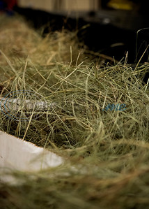 The top hay from the hay show, pictured here, is sold to buyers at the 35th annual Smith County Hay Show and Auction on Monday Sept. 23, 2019 at the 104th annual East Texas State Fair in Tyler. The top 25 hay entries were auctioned off to local businesses and residents to raise funds to support scholarships, the East Texas State Fair Junior Livestock Show and other programs.  (Sarah A. Miller/Tyler Morning Telegraph)