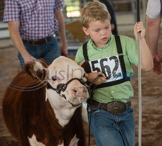 Barrett Kirkwood, 6, of Elgin, shows his cow in the Pre-Junior Miniature Hereford Show at the East Texas State Fair in Tyler on Wednesday Sept. 25, 2019. Kirkwood won Reserve Champion.  (Sarah A. Miller/Tyler Morning Telegraph)