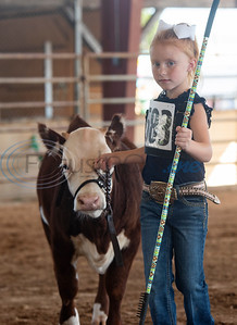 Maci Roberts, 7, of Bonham, shows her cow in the Pre-Junior Miniature Hereford Show at the East Texas State Fair in Tyler on Wednesday Sept. 25, 2019.    (Sarah A. Miller/Tyler Morning Telegraph)