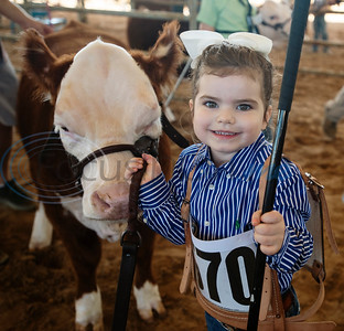 Hadley Geiger, 3, of Blue Ridge, shows her cow in the Pre-Junior Miniature Hereford Show at the East Texas State Fair in Tyler on Wednesday Sept. 25, 2019. She won Division Calf Champion.   (Sarah A. Miller/Tyler Morning Telegraph)