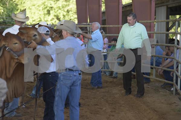 East Texas State Fair-Brahman Show