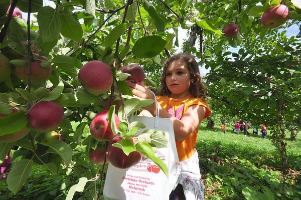 Apple picking at Jaeschke's Orchard-092514