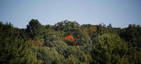 Almost Foliage-100518