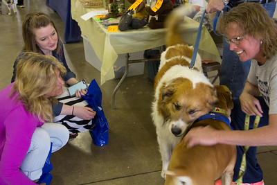 ALEC SMITH / GAZETTE Candy Kolarik, right, from Tracking Lucky Dogs, pets CiCi, a 4-year-old boxer mix who was available for adoption Saturday during the Pet-Tacular event at the Fairgrounds' Community Center. Next to CiCi was 7-year-old Buddy. Shown at left are Susan Brewer and her daughter Kaitlin Brewer of Medina.